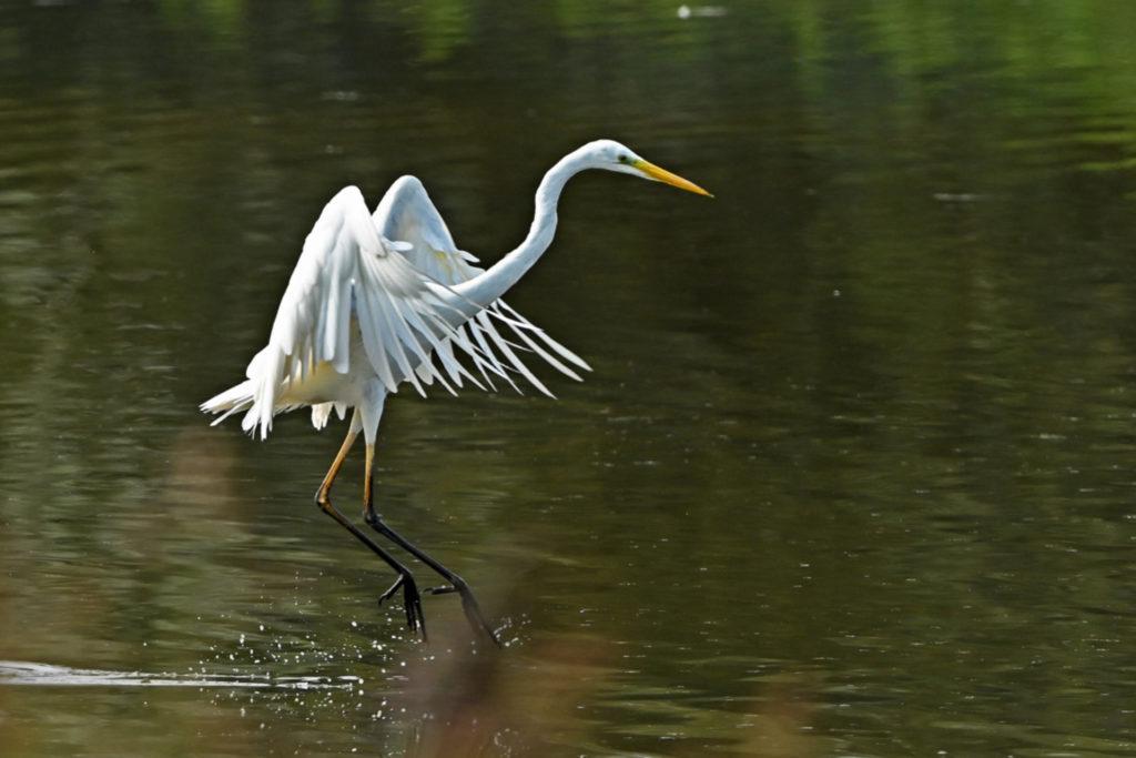 Watervogels Najaar 2020